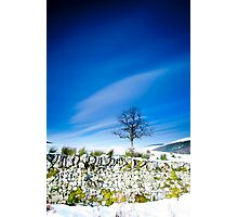 Tree and mossy wall in the snow, Southern Upland Way, Scottish Borders Photographic Print