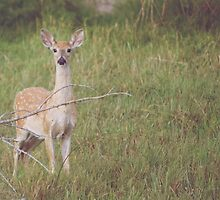 Watchful Deer 2 by lindsycarranza
