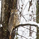 Great Horned Owl in Gentle Snowfall by Bill McMullen