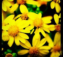 Yellow Focus by leapdaybride
