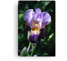 Vibrant Purple Flower Canvas Print