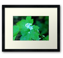 Small cool blue flowers Framed Print