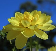 Bright & Yellow | Flower by log0008