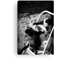 Playful Cats Canvas Print