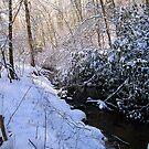 golden winter light by LoreLeft27
