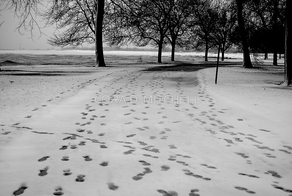 Footprints in the Snow by CORA D. MITCHELL