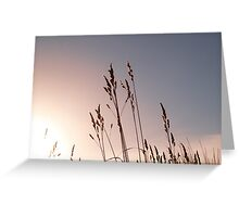 grass sead heads bend in breeze against morning sky. Greeting Card