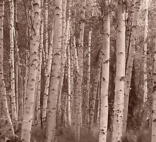 Birch forest in sepia. by brians101
