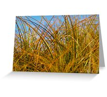 Beach grasses random growth. Greeting Card