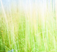 Soft green abstract. by brians101