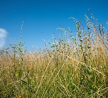 Grass under blue sky. by brians101
