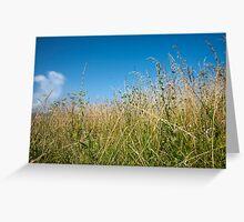 Grass under blue sky. Greeting Card