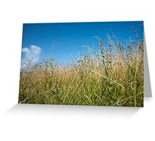 Grass under blue sky. Greeting Card