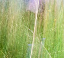Vertical grasses in abstract. by brians101
