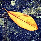 Laneway Leaf by unstoppable