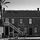 PIGEONS ON THE ROOF. by HanselASolera