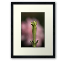 Petunia On A Rose Cloud Framed Print
