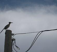 standing watch  by driftpics
