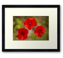 poppy's remember Framed Print