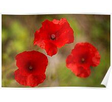 poppy's remember Poster