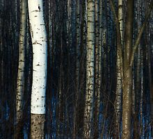 Springtime in the birch grove by biankonera