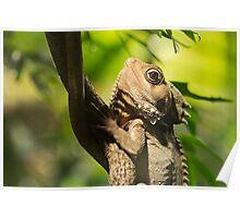 Reptilian Eye Poster