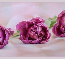 Peony Tulips by OpalFire