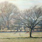 winter walk by Teresa Pople