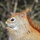 Ah Nuts, You Make My Eyes Sparkle! by Martha Medford