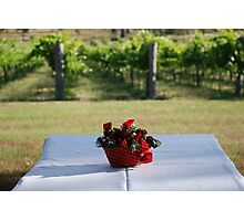Christmas in the vineyard Photographic Print
