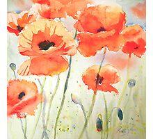 Poppy Meadow Photographic Print