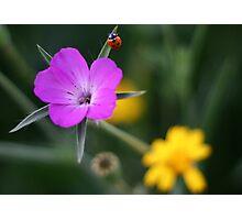 Primavera Photographic Print