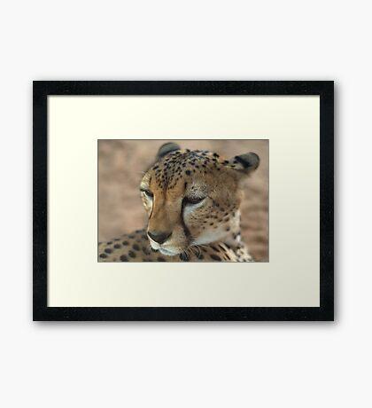 Cheetah's never prosper Framed Print