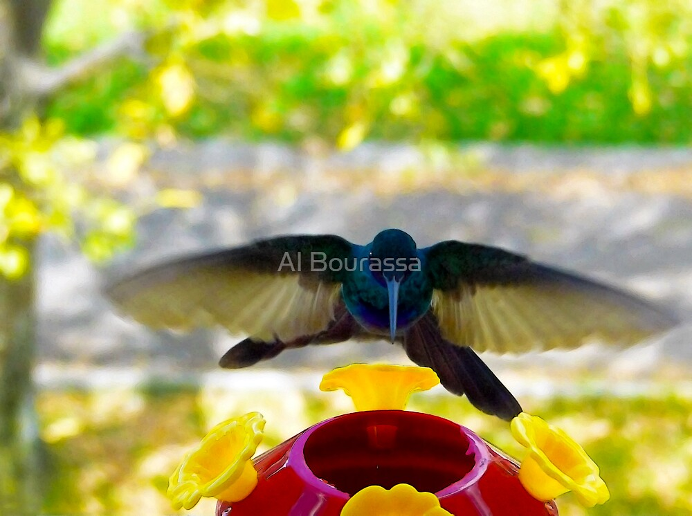 Hummer Zooming In by Al Bourassa