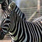 Bella Zebra by RJ-Salazar