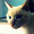 Feline Blue by AnnieJayne