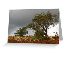 Trees and Stormy Skies  Greeting Card
