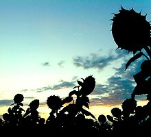 Sunflowers at Sunset by Jock Anderson