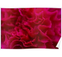 Abstract Carnation Flower Poster