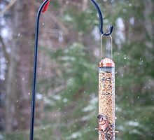 Cardinal Couple Come to Feeder by Mikell Herrick