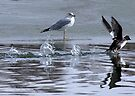 It&#x27;s Called Bird Skipping by Betsy  Seeton