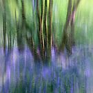 Essence Of Bluebells by Patricia Jacobs CPAGB LRPS BPE4