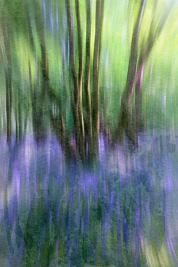 Essence Of Bluebells by Patricia Jacobs DPAGB LRPS BPE4