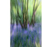 Essence Of Bluebells Photographic Print