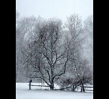 Tree Withstanding A Snowstorm - Middle Island, New York by © Sophie W. Smith