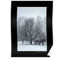Tree Withstanding A Snowstorm - Middle Island, New York Poster