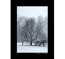 Tree Withstanding A Snowstorm - Middle Island, New York Photographic Print