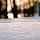 Macro Snow by Daniel Pinnegar