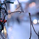 Bokeh Berries by Daniel Pinnegar
