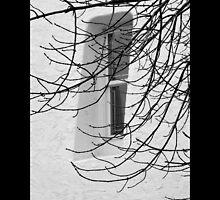 Narrow Window Behind Tree Branches - Port Jefferson, New York by © Sophie W. Smith